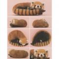 Japan Hamanaka Wool Needle Felting Kit - Red Panda - 2